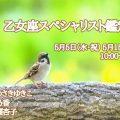 5/5 5/15 乙女座スペシャリスト鑑定会@五月病対策